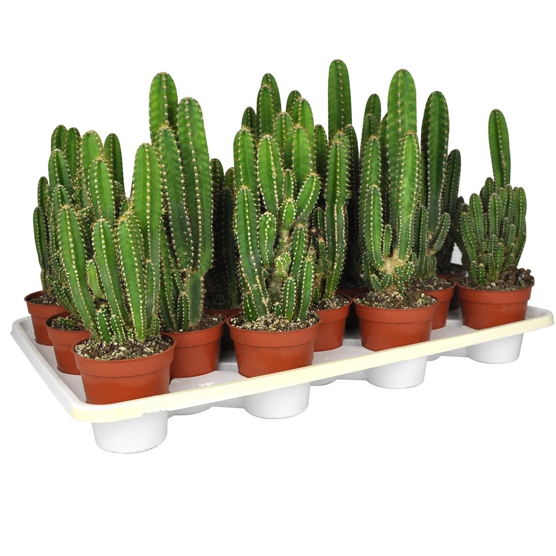 Succulents Amp Cacti Planterra