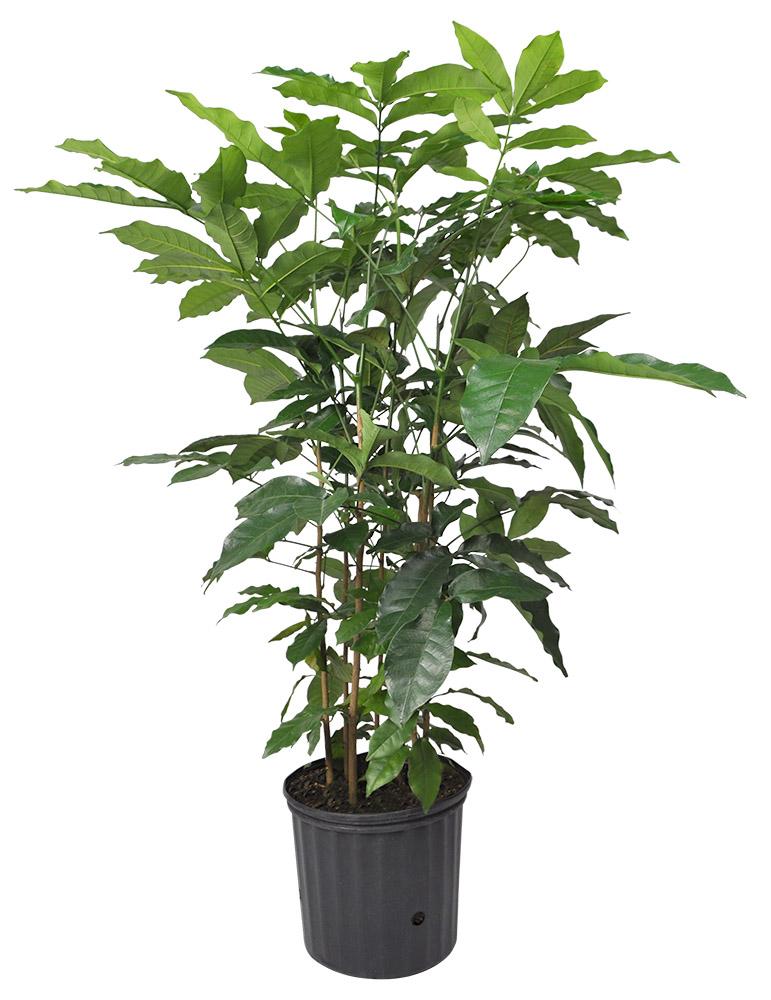 Tropical Plants Planterra